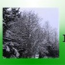 Ebay Store Logo  Green Tree Winter Snow Dress Up your Ebay Store Add your Store Name!!