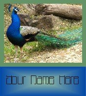 Ecrater Store Logo & HomePage Image Green Blue Peacock Dress Up your Ecrater Store Add your Name!
