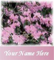 Ecrater Store Logo & HomePage Image Pink Azalea flowers Dress Up your Ecrater Store!!