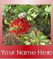 Ecrater Store Logo & HomePage Image Red White Hawaiian Flower Dress Up your Ecrater Store!!