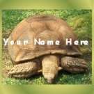 Ecrater Store Logo & HomePage Image Turtle Tortoise Green Dress Up your Ecrater Store!!