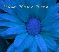 Neoloch.com Store Banner and Logo Combo Blue Flower Add your Store Name!