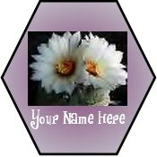 Neoloch.com Store Banner and Logo Combo White Cactus Flower Hexagon Add your Store Name!