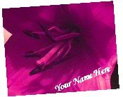 Neoloch.com Store Banner and Logo Combo Pink Magenta Lily Flower Add your Store Name!