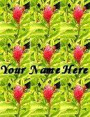Neoloch.com Store Banner and Logo Combo Pink Hawaiian Flower Add your Store Name!