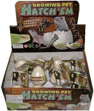 12 Hatchem Lizard Eggs
