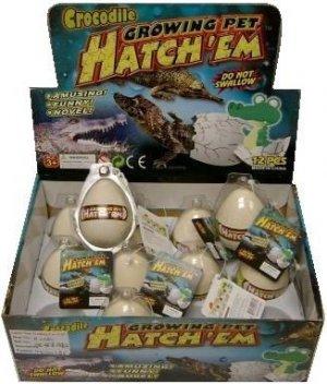 12 Hatchem Crocodile Eggs