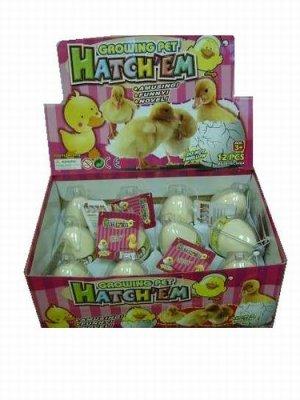 12 Hatchem Duck Eggs