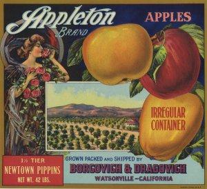 APPLETON 3 1/2 TIER NEWTOWN PIPPINS APPLE CRATE LABEL