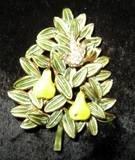Vintage Signed Cadoro Partridge/Pear Tree Brooch