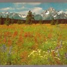 A CARPET OF WILDFLOWERS GRAND TETON PARK WYOMING POSTCARD 649