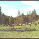 GROUP OF ELK IN THE MOUNTAIN 1969 WYOMING MONTANA UTAH POSTCARD