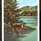 POST CARD LOVELY COLORFUL ARTWORK OF A DEER IN HIS NATIVE WILDS ADIRONDACK MOUNTAINS NY NEW YORK