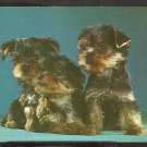 3 CUTE YORKSHIRE TERRIER PUPPIES YORKIES 903