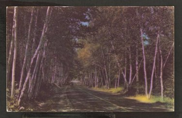 SHELBURNE BIRCHES LINING ROADWAY WHITE MOUNTAINS NEW HAMPSHIRE 905
