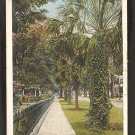 SIDEWALK ON 5TH STREET JACKSONVILLE FLORIDA PALM TREES IRON RAILING 1916/30 WHITE BORDER 918