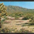 TEDDYBEAR CHOLLA CACTUS & VERBENA CALIFORNIA DESERT 961