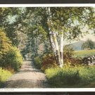 Country Road Birch Trees Stone Wall Distant Mountain Phostint Card 975