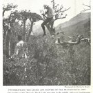 1918 NatGeo Article The Isle of Frankincense by Charles K Moser