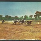 Racing Down the Home Stretch Saratoga Race Track New York Thoroughbred Horses Jockeys Postcard 1032