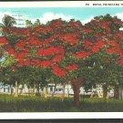 Splendid Royal Poinciana Tree Florida White Border Postcard 1084