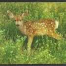 Adorable Spotted Baby Fawn Deer in Green Meadow Chrome Postcard 127