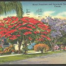 Florida Royal Poinciana Jacaranda & Palm Trees Roadside Home Linen Postcard 1104