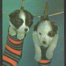 The Monday Wash 2 Adorable Puppies in Socks Hanging From the Wash Line Chrome Postcard 1117