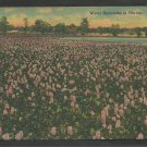 A Field of Water Hyacinths In Florida Linen Postcard 1152