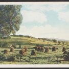 Wheat or Hay Stacks Ready For Harvest on Rolling Fields White Border Postcard 1184