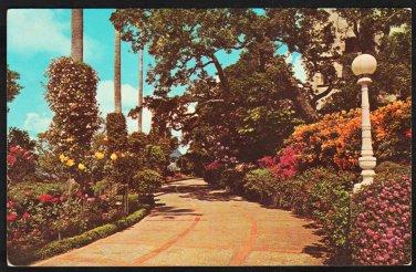 Azalea Walk Hearst Castle San Simeon CA Mexican Fan Palms Climbing Roses Chrome 1201