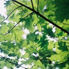 Photography Print - A4 - Green Leaves