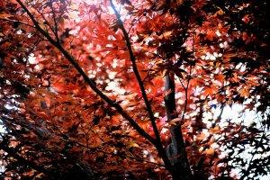 Photography Print - A4 - Autumn Reds