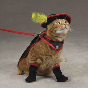 MEDIUM Savvy Tabby Kitty Crusader Adorable Pet Costume Cat Halloween