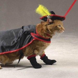 SMALL Savvy Tabby Kitty Crusader Adorable Pet Costume Cat Halloween