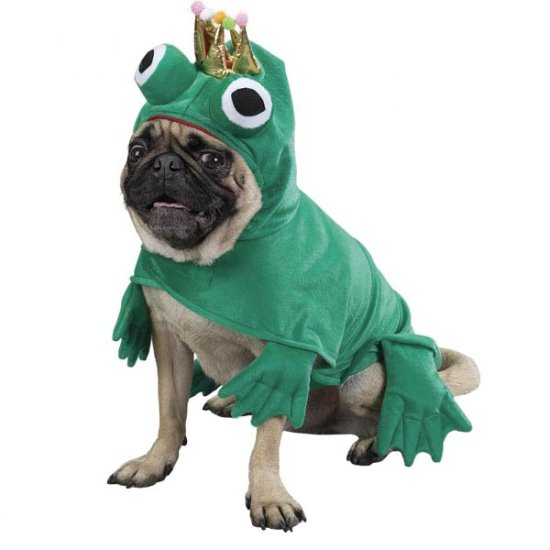 MEDIUM Prince of Frogs Pet Halloween Costume Dog Charming