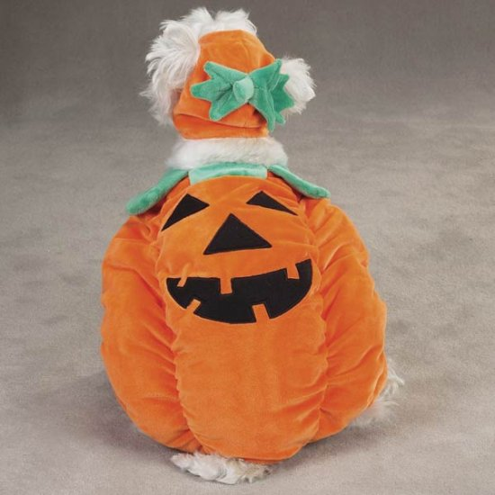 SMALL Pumpkin Pooch Costume jack-o-lantern Dog Halloween