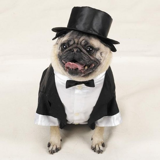 LARGE Casual Canine Doggy Tuxedo Pet Halloween Dog Costume Tux with Tails & Top Hat Wedding