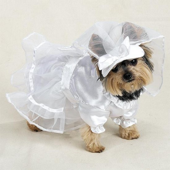 LARGE Doggy Bridal Gown Pet Halloween Dog Costume Wedding Dress