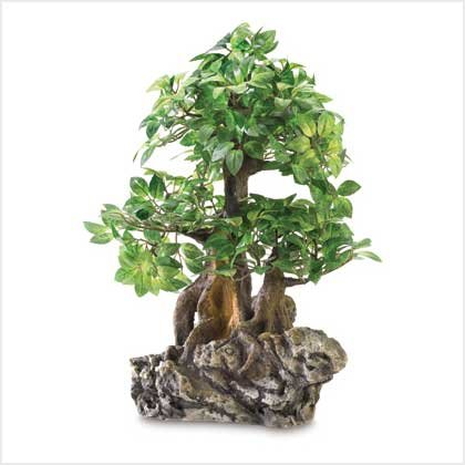 Everlasting Bonsai Tree