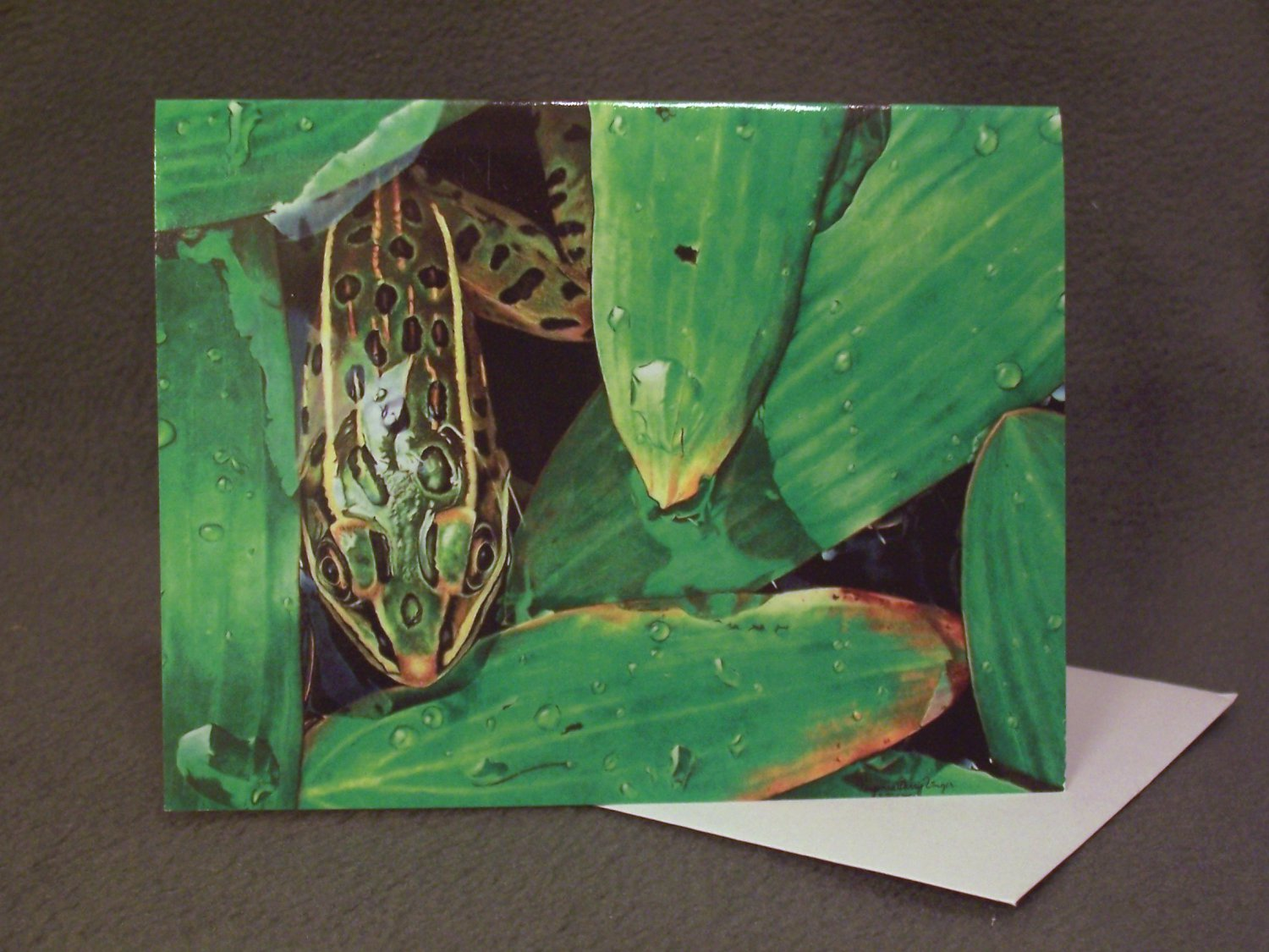 """4 Blank Greeting Cards Notecards- """"Finished Rendering of Greens""""- Frog- Colored Pencil Artwork-"""