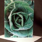 "4 Blank Greeting Cards Notecards- ""Cabbage""- Photograph"
