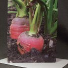 "4 Blank Greeting Cards Notecards- ""Carrots""- Photograph"
