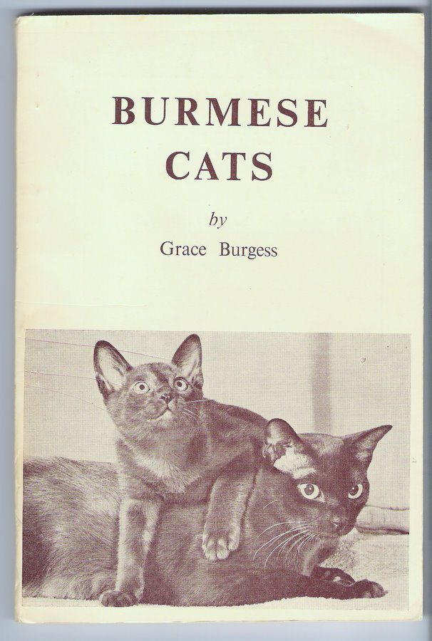 Burmese Cats Grace Burgess Origins and History in US United Kingdom Australia