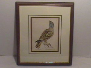 Original Nov 9, 1793 Copper Engraving by William Lewin-GREY FALCON/EC