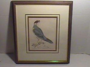 Original Nov 9, 1793 Copper Engraving by William Lewin-Rough Legged FALCON/EC