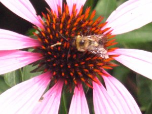 "10"" x 12"" Beautiful purple flower with bee"