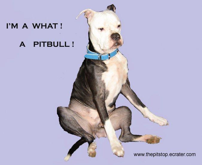"Pitbull T-Shirt  ""I'm a what"""