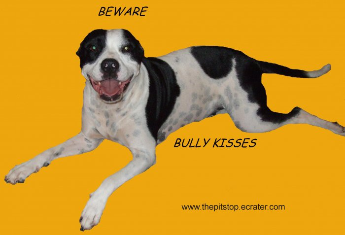 "Pitbull T-Shirt  ""bully kisses"""
