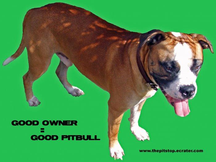 """Pitbull T-Shirt """"good owner"""""""